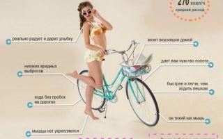 Сколько калорий тратит велосипедист во время езды — всё о велоспорте